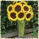 130x130 sq 1248117031930 sunflowers