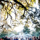 130x130 sq 1344919909876 savannahwedding