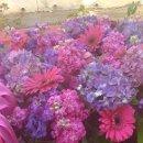 130x130 sq 1362778069384 purplehydrenga