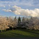 130x130_sq_1395705349908-trees-outside-entranc