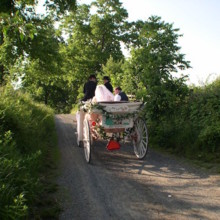 220x220 sq 1478709011540 horse carriage on road