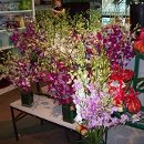 130x130 sq 1309370799391 orchids