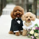 130x130 sq 1382037805609 a.baa cute puppies wedding