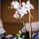 130x130 sq 1212620632900 florals1caroline