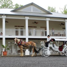 220x220 sq 1430431682692 horse and carriage in front of house 2015