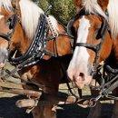 130x130_sq_1272812840383-horsesinset