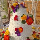 130x130_sq_1295302305427-weddingcakecolorfulflowersyelloworange