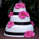 130x130_sq_1326143882919-weddingcakewhitepinkgerberdaiseyblackribbonround
