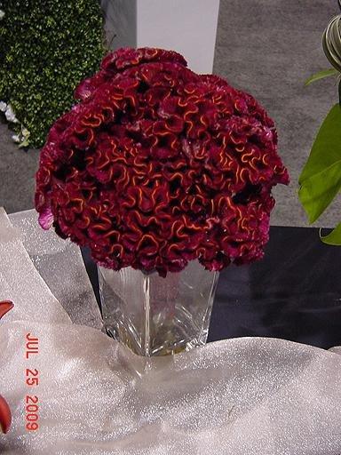 1250363560072 Kcwbs070916 Blue Springs wedding florist