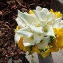 130x130_sq_1318908773866-bloomngrow1