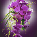 130x130 sq 1414777746480 orchidbridalbouquet may2012 120813100202 121001101