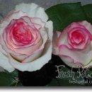 130x130 sq 1226361443273 dolce vita roses