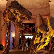 Natural History Museum of Los Angeles County - Venue - Los Angeles ...