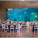 130x130 sq 1392420994432 seattle aquarium wedding 803