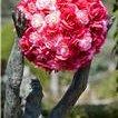 130x130 sq 1304023872017 flowerball