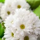 130x130_sq_1403897001094-wedding-flowers-1