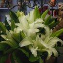 130x130 sq 1255196853692 weddingflowers065