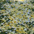130x130 sq 1375239736947 pave of petals