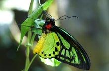 220x220 1203289912258 butterfly