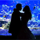 130x130 sq 1370269443858 silhouette kiss at tank lighter