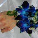 130x130_sq_1332889855223-bluedendrocorswrist