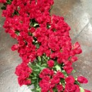 130x130 sq 1367357984819 roses