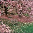 130x130 sq 1355776648585 magnoliaimage3.robcardillo