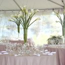130x130 sq 1273514963502 weddingcenterpieces