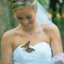 130x130 sq 1311679175426 bridebutterflyl