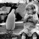 130x130 sq 1273956129127 penguin1