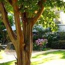 130x130 sq 1274285264834 tree