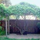 130x130 sq 1325637477404 wisteriaarbor3
