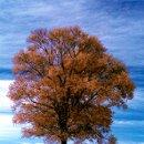 130x130_sq_1318521327529-infraredtreeblog