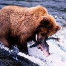 130x130_sq_1224509265116-bear6