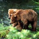 130x130 sq 1224509283991 bears7