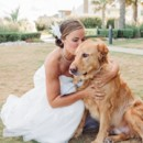 130x130 sq 1447195368842 virginia beach wedding with a dog 09