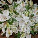 130x130_sq_1248349580193-flowers2009027