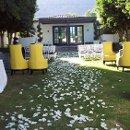 130x130 sq 1342714559608 petals