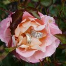 130x130_sq_1277318088491-weddingrings
