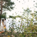 130x130 sq 1357534128967 greenpommephotographyvancouverweddingphotographer4