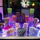 130x130 sq 1358395086813 purplegreenpinkhardrockcafe