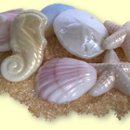 Seashells at www.sosweetchocolates.com