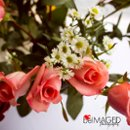130x130 sq 1285880412326 prettypinkweddingroses