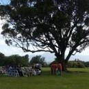 130x130 sq 1414266312120 sunset ranch wedding ceremony