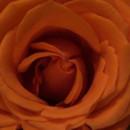 130x130 sq 1444612495405 flower