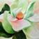 130x130_sq_1414159354517-magnolia-for-websitee2