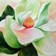 130x130_sq_1414162612414-magnolia-for-websitee2