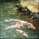 130x130 sq 1362059838864 fish