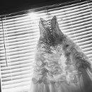 130x130 sq 1349133624078 dress