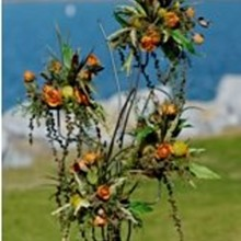 220x220 sq 1288151024603 pacificorange159x239